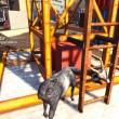 goat-simulator-13