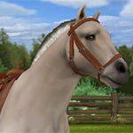Pony Trails Spieletest: Gemütlicher Pferderitt für Tier-Fotografen