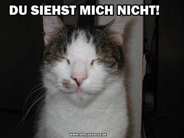 cat comic - du siehst mich nicht!