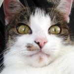 Cat Comics: Witzige Katzenfotos bei Spielesnacks.de