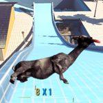 Goat Simulator News: Mit dem Patch 1.1 kann deine Ziege ab heute Rad fahren!