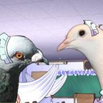*Gurr-Gurr* Verliebe dich in Hatoful Boyfriend mal in eine Taube!
