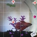 Unglaublich, aber wahr: Echter Goldfisch spielt Pokèmon auf dem Gameboy