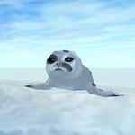 Star Stable: Süße Robben-Babys wollen dein Herz erobern