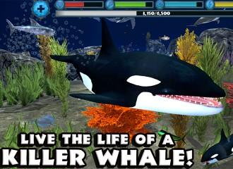 orca-simulator-teaser